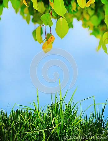 Green leaf on a tree