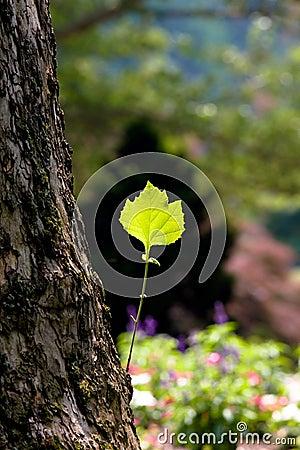 Green leaf on a tree trunk