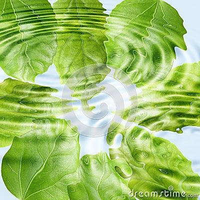 Green leaf under blue water