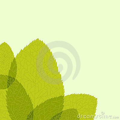 Green leaf. Vector illustration