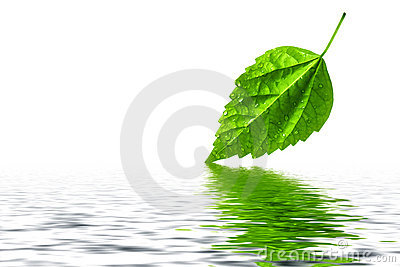 Green leaf water reflection