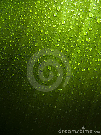Free Green Leaf With Dew Drops Stock Images - 11790364