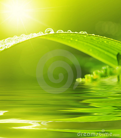 Free Green Leaf With Raindrops Royalty Free Stock Photography - 7685337