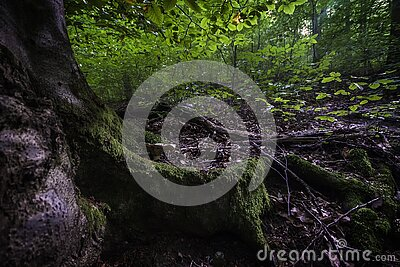 Green Leafed Tree Free Public Domain Cc0 Image