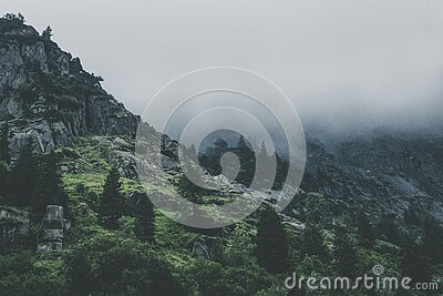 Green Leafed Trees During Fog Time Free Public Domain Cc0 Image
