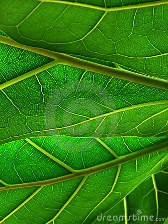 Free Green Leafs Royalty Free Stock Photo - 4943145