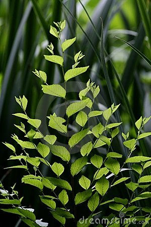 Free Green Leafs Royalty Free Stock Image - 5585606