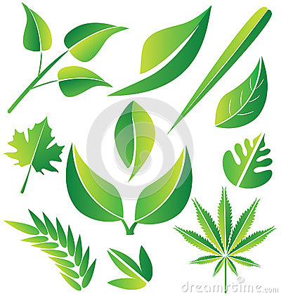 Free Green Leafs Collection Stock Photography - 30220252