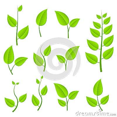 Green leafs set