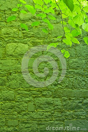 Green leafs and stone wall