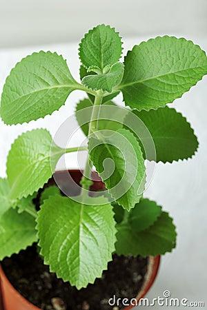 Green leafy houseplant