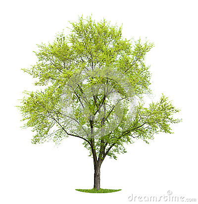 Free Green, Leafy Tree On Grassy Patch Stock Image - 52151931