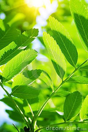 Free Green Leaves Stock Photo - 16838570
