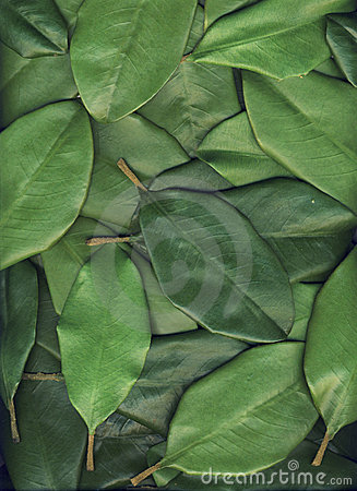 Free Green Leaves Background Royalty Free Stock Images - 4514929