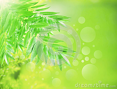 Green leaves with beautiful blur and bouquet backg