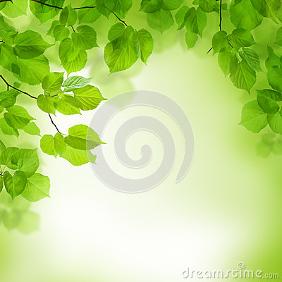 Free Green Leaves Border, Abstract Background Stock Photography - 28593022