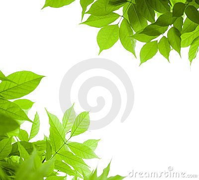 Green leaves border nature background