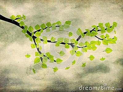 Green leaves on brunch on grunge background