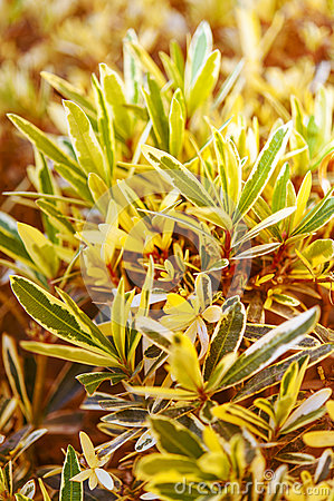 Green leaves of bush