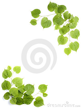 Free Green Leaves, Decorative Frame Royalty Free Stock Photo - 2442895
