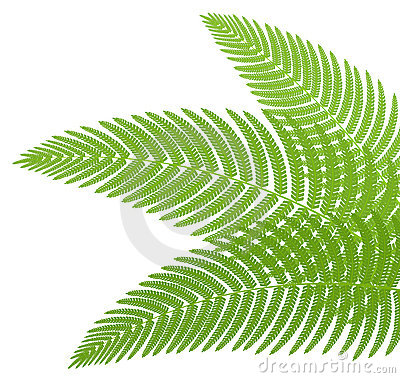 The green leaves of a fern.