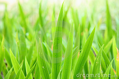 Green leaves backgrounds