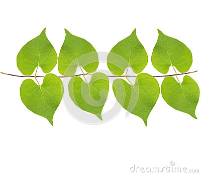 Green leaves hanging on air isolated white