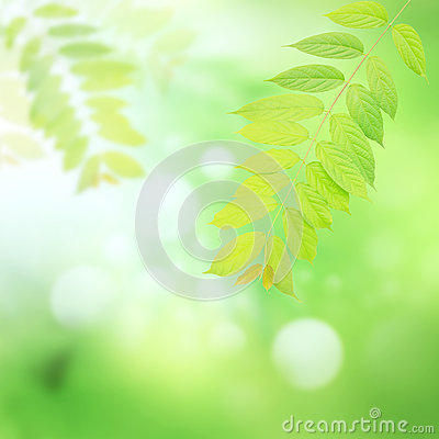 Green leaves and harmony background