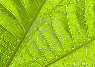 Green leaves I