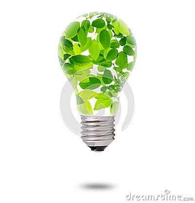 Green Leaves inside Bulb