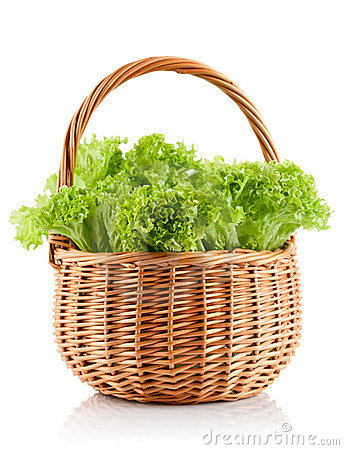 Green leaves lettuce in the basket