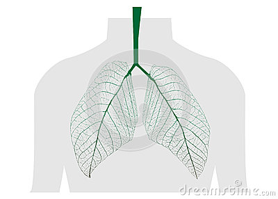 Green leaves of the lung