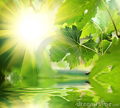Free Green Leaves Over Water Royalty Free Stock Image - 5223016
