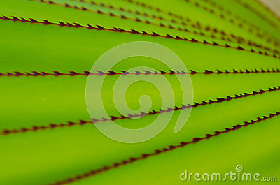 Abstract aloe leaves