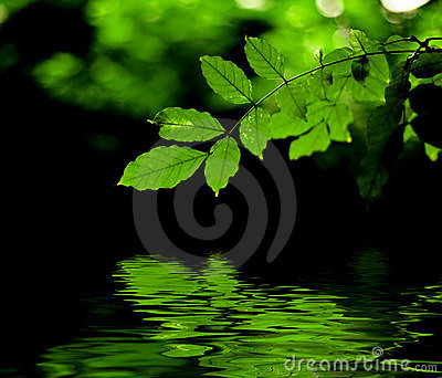 Green leaves reflection