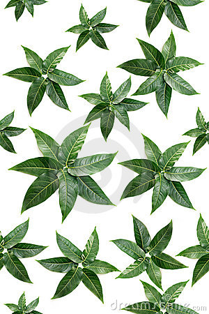 Green leaves shapes in a seamless pattern