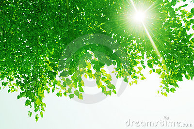 Green leaves and sun rays