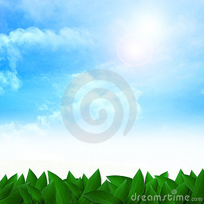 Green leaves on Sunshine background