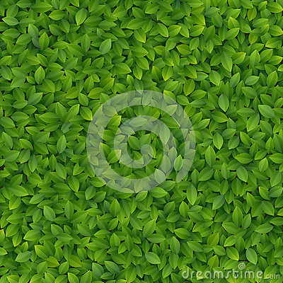 Free Green Leaves Texture Royalty Free Stock Photos - 24901818