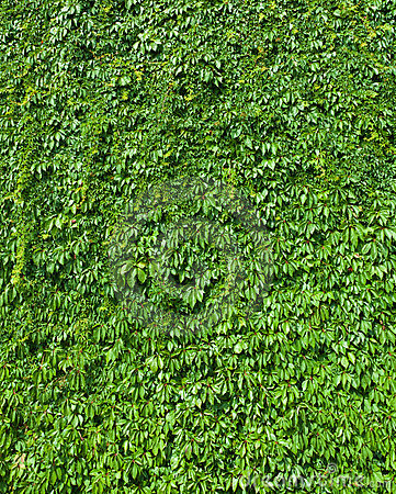 Free Green Leaves Top View Nature Background Stock Photos - 23649983