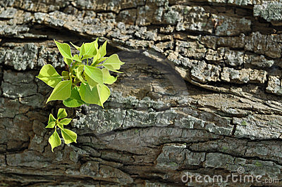 Green leaves on tree bark