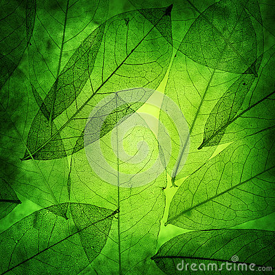 Free Green Leaves Vintage Background Stock Photos - 33839923