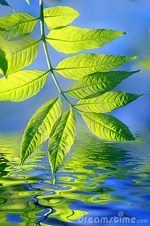 Green leaves and water