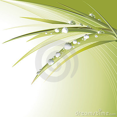 Free Green Leaves With Shiny Drops Stock Photos - 4975453