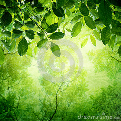 Free Green Leaves With Sun Stock Image - 30211201