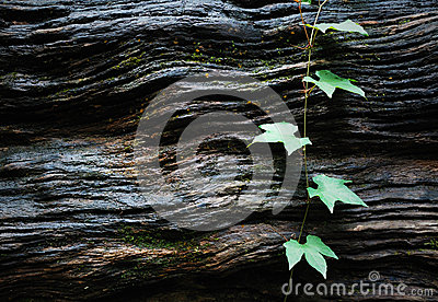 Green leaves on wood texture
