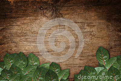 Green leaves on wood texture background