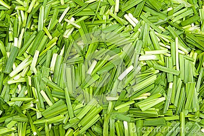 Green leek stem