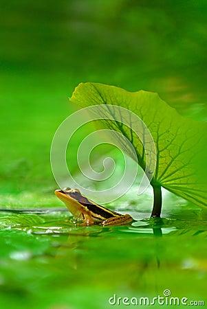 Free Green Legged Frog Stock Photo - 928790