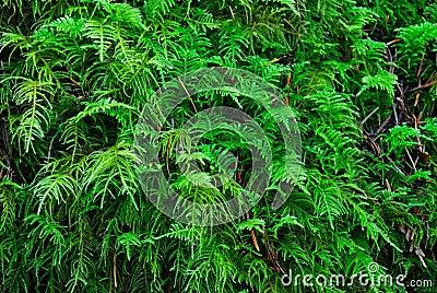 Green lichens on rock